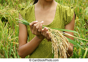 World food security, famine, Asia rice field - World food...