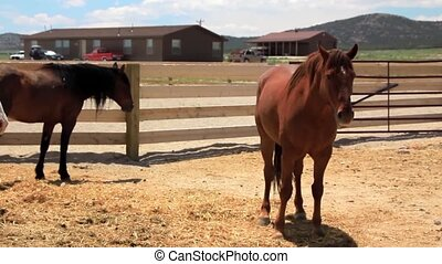 Mustangs at the Ranch - Paint mare with newborn foal nursing...