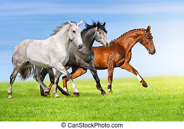 Horses run in pasture - Group of three horse run gallop on...