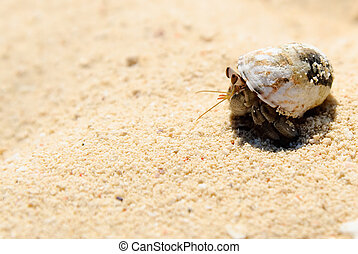 Hermit crab on white sand