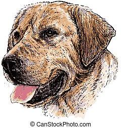 Labrador Retriever - Image of Labrador Retriever hand drawn...