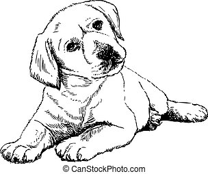 Labrador Retriever - Image of Labrador Retriever puppy hand...