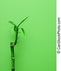 Bamboo plant on green background