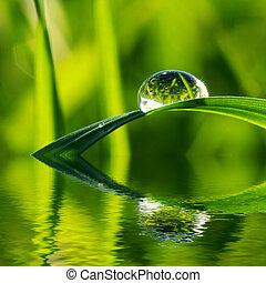 grass - Dew drop on a blade of grass