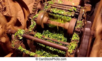 Device for cutting grass - Old device for cutting grass for...