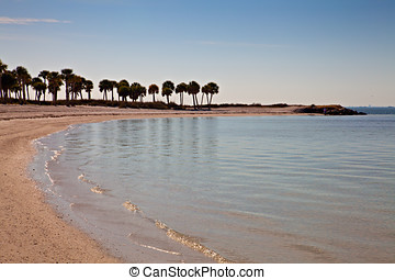 Palm Trees on Beach - Palm Trees on Florida Gulf of Mexico...