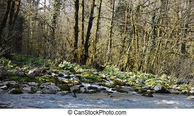 Mountain River among Trees and Stones in Gorge 3 - Mountain...
