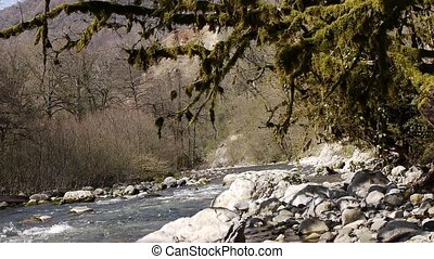 Mountain River among Trees and Stones in Gorge 10 - Mountain...