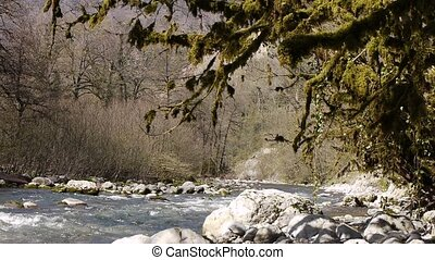 Mountain River among Trees and Stones in Gorge 7 - Mountain...