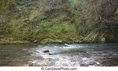 Mountain River among Trees and Stones in Gorge 11 - Mountain...