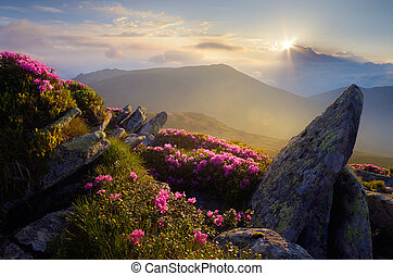 Morning in the Mountains - Mountain landscape. Sunlight....