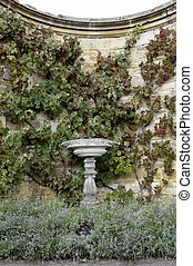 Stone bird-bath - A stone bird-bath with a grape vine...