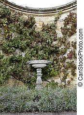 Stone bird-bath - A stone bird-bath with a grape vine...