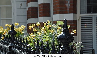 Yellow Lily flower in london - Yellow lillies inside little...