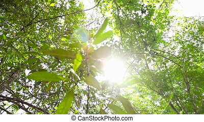 Sun's rays in jungle