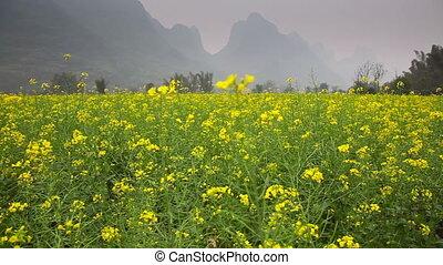 Rapeseed field slider - Yangshou area in China