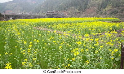 Rapeseed field slider - Rapeseed field in China