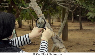 Pomologist studying fig trunk - Pomologist is studying trunk...