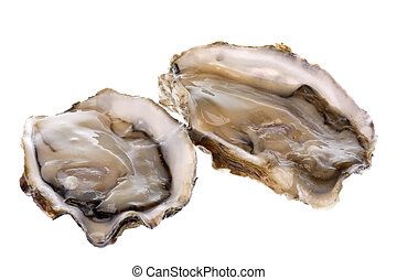 Fresh Oysters Isolated - Isolated image of fresh oysters...