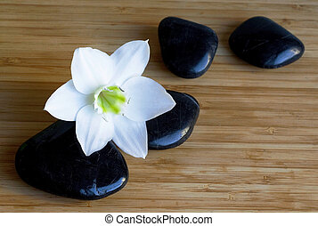 Spa black stones with white flower on wooden background