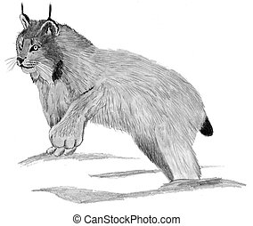 Canadian Lynx Lynx canadensis Pencil and Computer Drawing