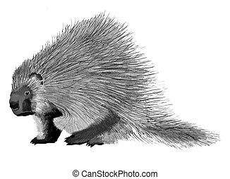 Porcupine Erethizon dorsatum Ink and Pencil Drawing
