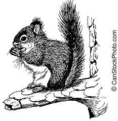 Red Squirrel Tamiasciurus hudsonicus Pen-and-Ink Drawing