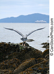Heron - Stanley Park, Vancouver, BC, Canada - Stanley Park,...