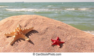 Relax on the beach - Starfish on the sand on the sea...