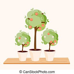 Three small tangerine trees on a shelf - Three small...