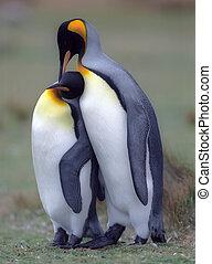 國王, 企鵝