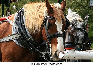 Horse Drawn Tours - Stanley Park, Canada - Stanley Park, One...