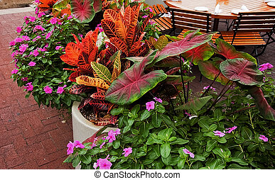 Brightly Colored Potted Plants - These brightly colored...