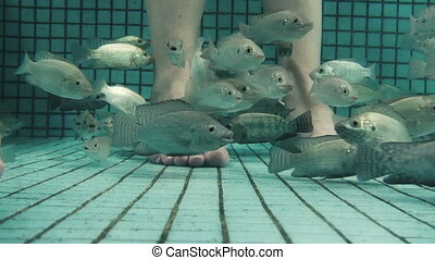 Underwater Fish Spa Pedicure Close - A underwater closeup of...