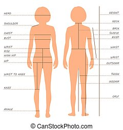 body measurements size chart, - vector body measurements...