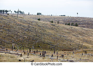 Decimated deforested hillside slopes with the remnants of...