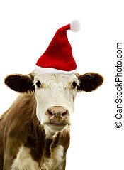 Portrait of a cow wearing a christmas hat