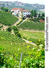 viñas, y, lagares, en, Piemont,