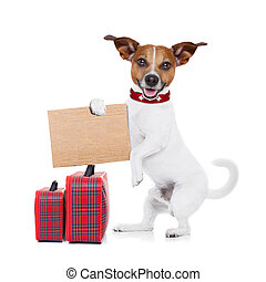 hitchhiker dog - hitchhiker jack russell dog waiting for a...