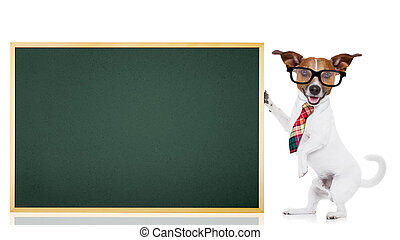 dog school teacher - jack russell dog as school teacher...