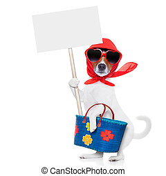 shopping dog diva - jack russell dog diva lady with bag...