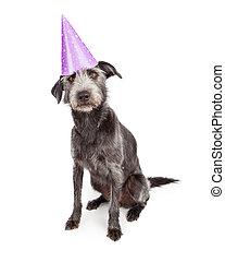 穿, 紫色, 帽子, 狗, 黨