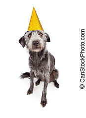 Terrier Dog Wearing Yellow Party Hat - Cute terrier...