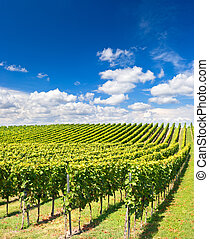 vineyard landscape with cloudy blue sky