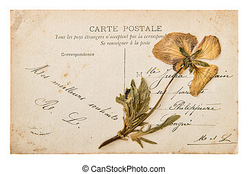 antique french handwritten postcard with dry pansy flower -...