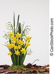 Spring bulb flowers - Spring flowering yellow Tete a Tete...