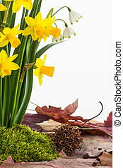 Spring flowers, moss and dried leaves - Close up of...
