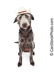 Funny Terrier Dog Wearing Cowboy Hat