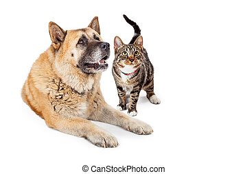 Large Dog and Cat Looking Up Together