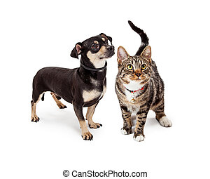 Small Dog and Cat Looking Up Together
